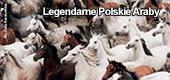 Legendarne Polskie Araby